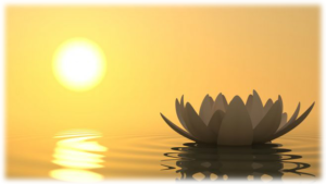 lotus_home_blur